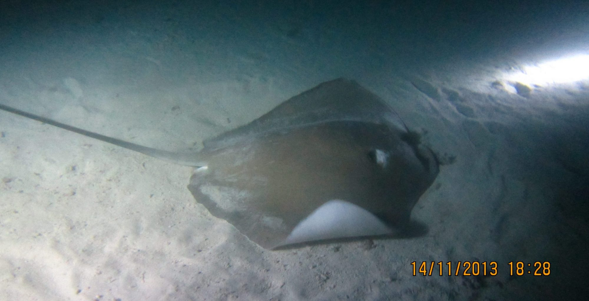 2013_11-Dyk-Maldiverne (161)