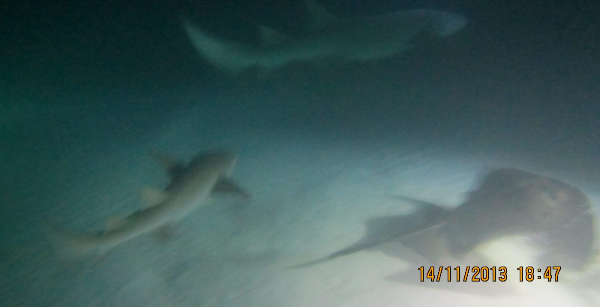 2013_11-Dyk-Maldiverne (165)
