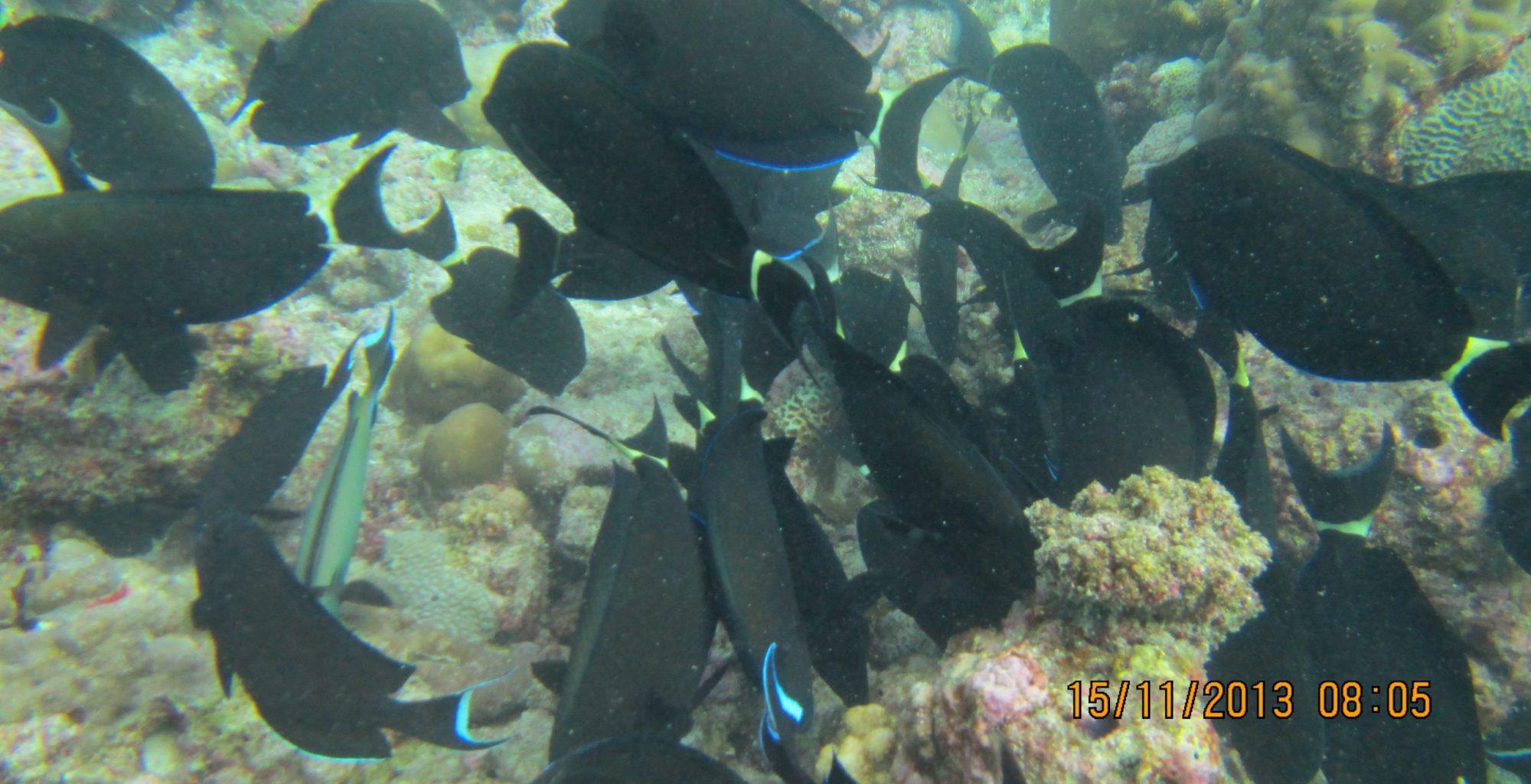 2013_11-Dyk-Maldiverne (191)