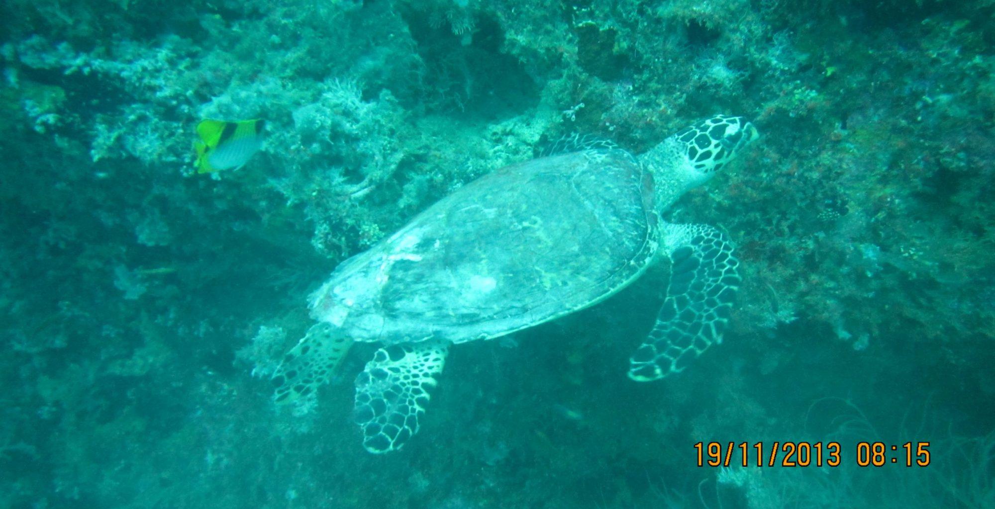 2013_11-Dyk-Maldiverne (305)