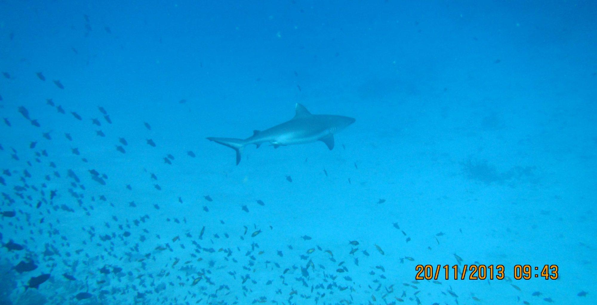 2013_11-Dyk-Maldiverne (361)